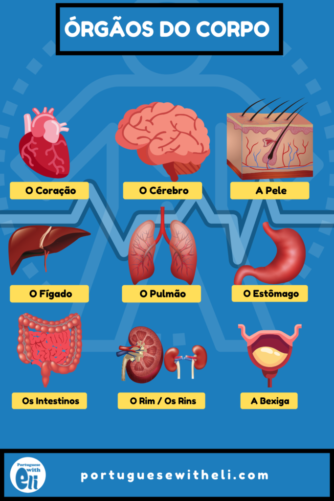 internal organs in portuguese