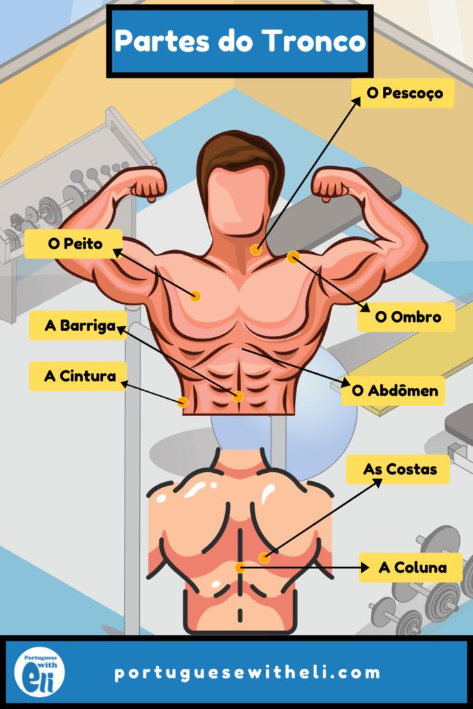 upper body in portuguese